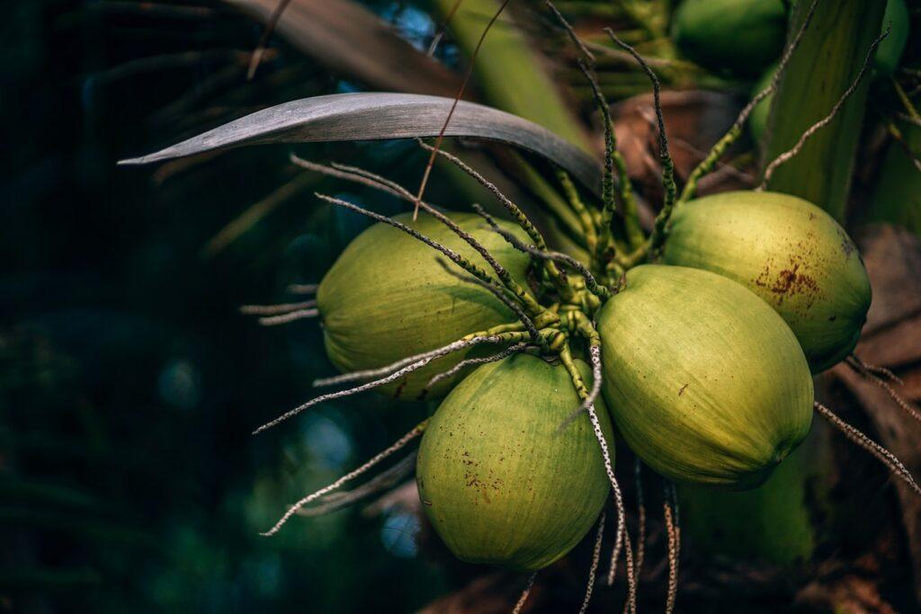 coconut nutritional profile, coconut nutrition